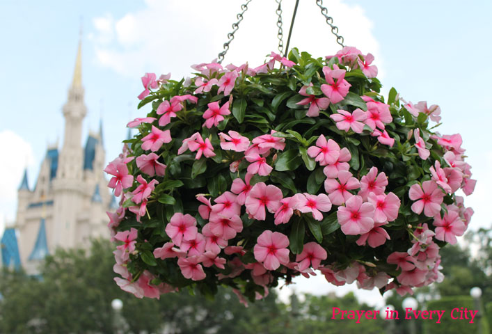 flowers and castle